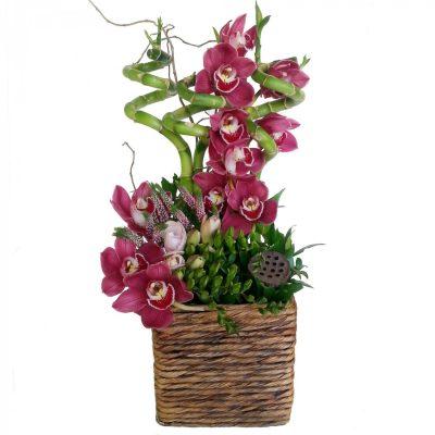 Orchidea aranžmán