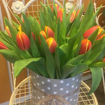 Dúhové tulipány v bodkovanej krabičke